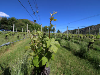 Gibbston Valley Winery and Restaurant